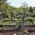 Jardins ouvriers, mai 2005